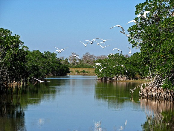 Everglades, Florida by Bogeskov (creative commons)