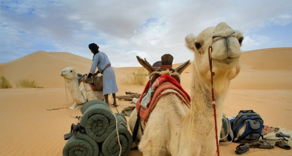Camel trek in the Adrar mountains of the Sahara desert in Mauritania