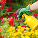 Pesticide Free Pest Control for your Garden